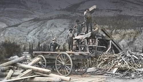 Forest History Program